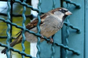pájaro en un cierre rígido